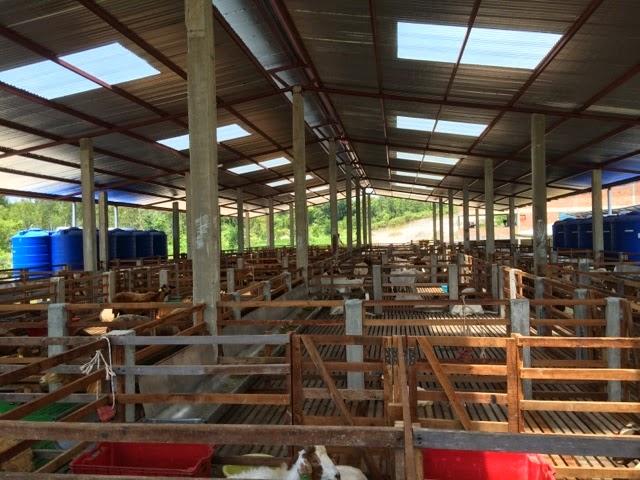 meat goat farming business plan