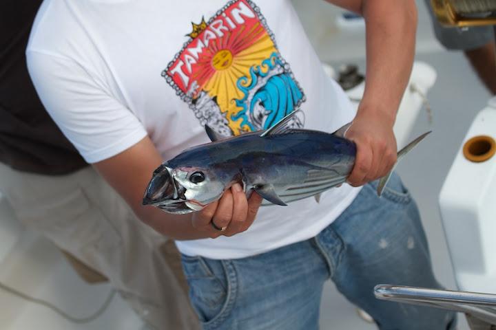 Мини тунцы