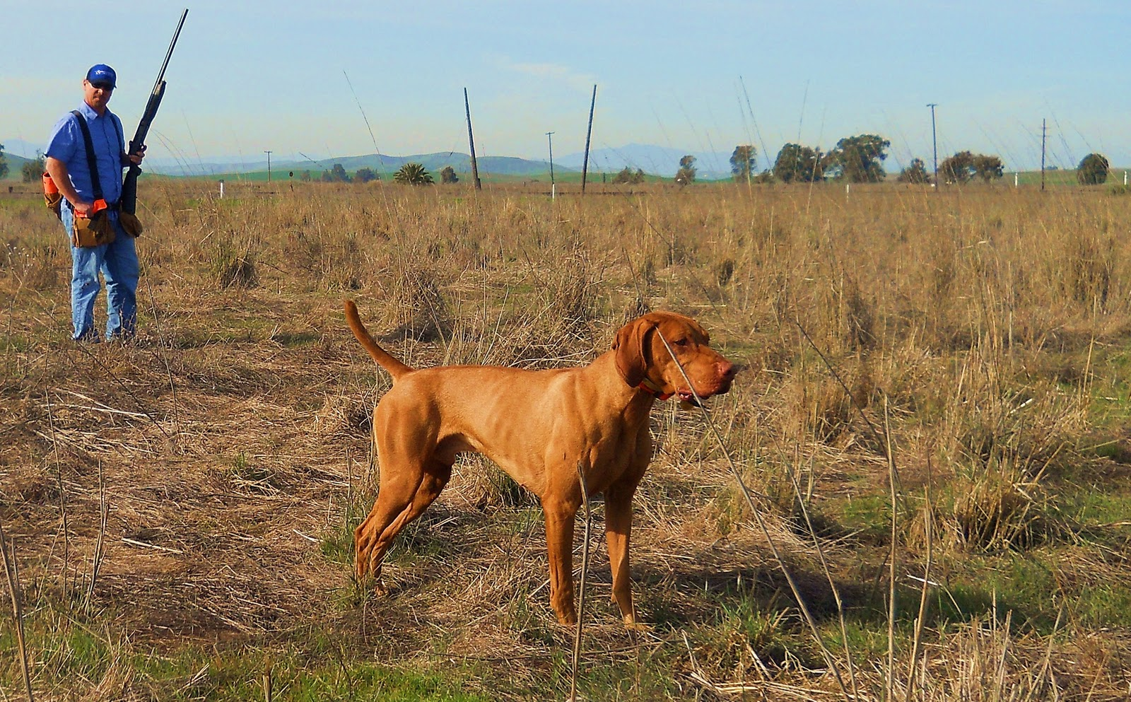 redbirddog - a hungarian pointer (vizsla) blog: february 2011