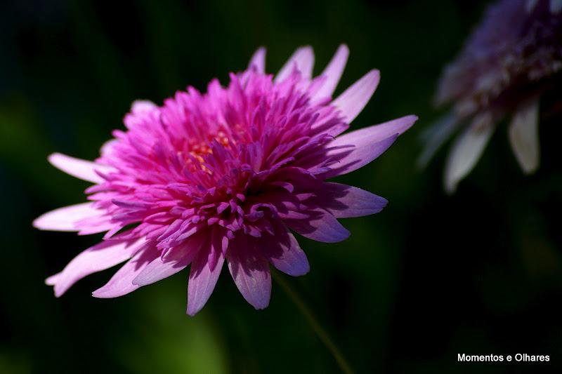 Primavera Pink