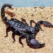 Lamine Ndiaye