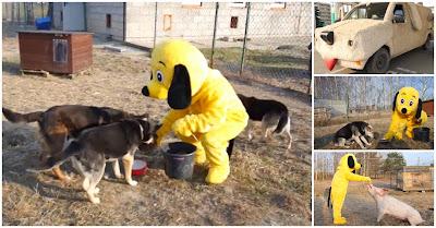 Youtuber usa Carrinha-cão para alimentar cães abandonados e outros animais