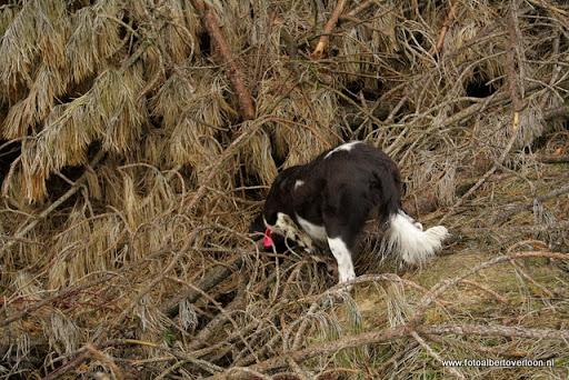 vossenjacht in de Bossen van overloon 18-02-2012 (53).JPG