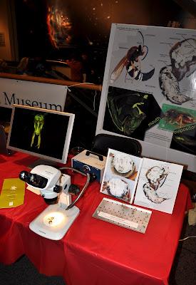 Bugfest 2011 c