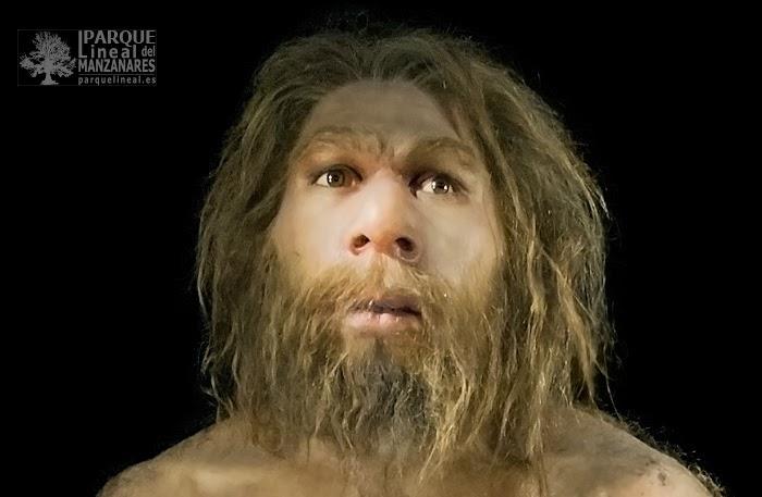 Homo neanderthalensis. Museo de la evolución humana. Burgos. Gracias a los recientes avances genéticos hoy sabemos que los neandertales eran rubios, claros de piel y posiblemente con pecas.
