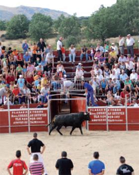 Hasta 100.000 euros de ayuda por ganadería para criadores madrileños de toro de lidia