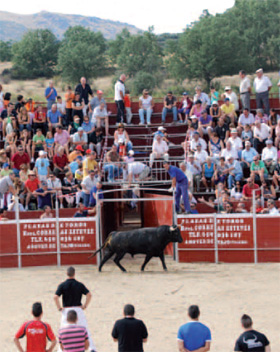 Mejora de la raza de los toros de lidia