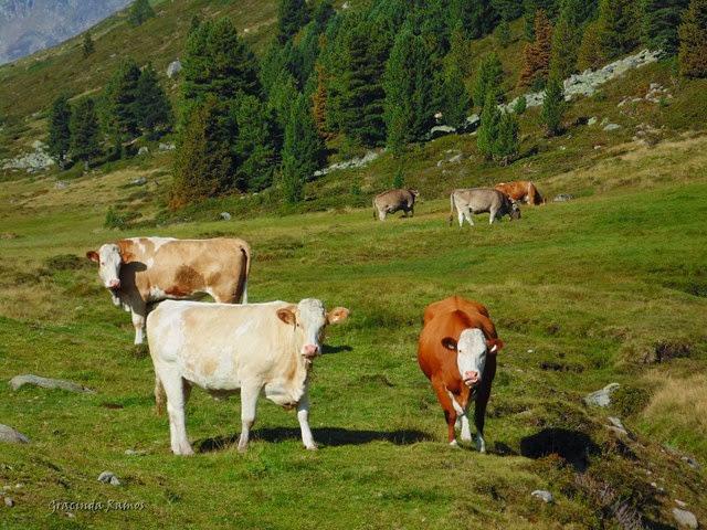 passeando - Passeando pelos Balcãs... rumo à Roménia! - Página 12 DSC00045