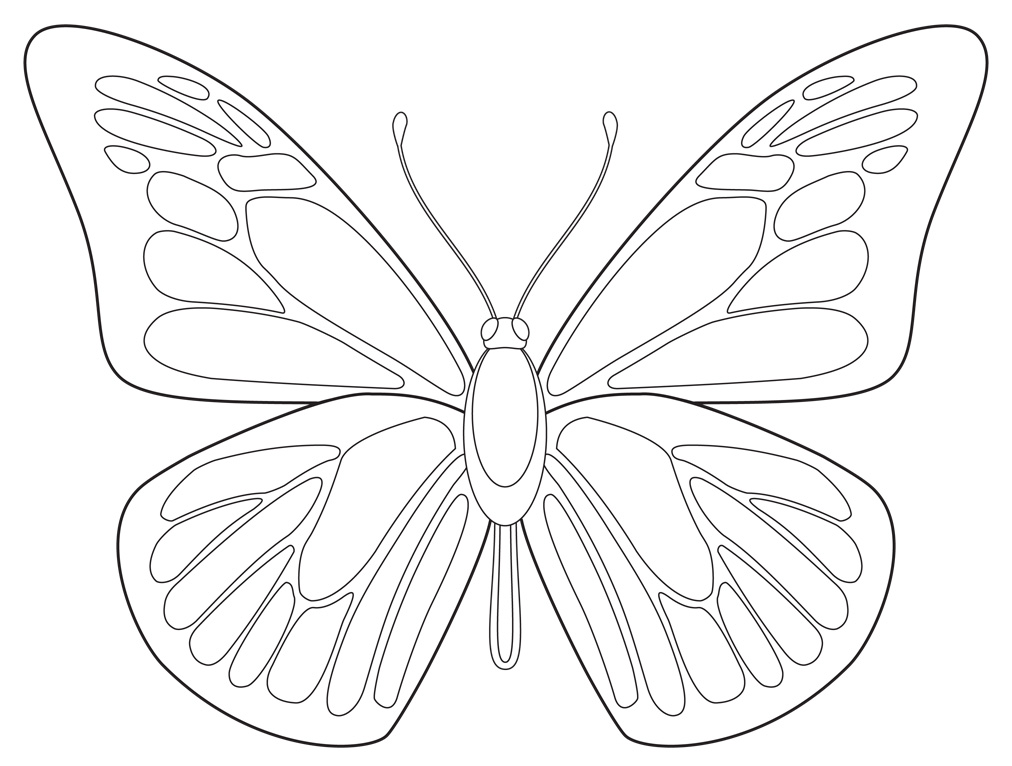 free butterfly drawing download
