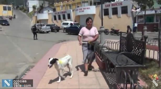 Buscan vacunar a 172 mil mascotas en el departamento