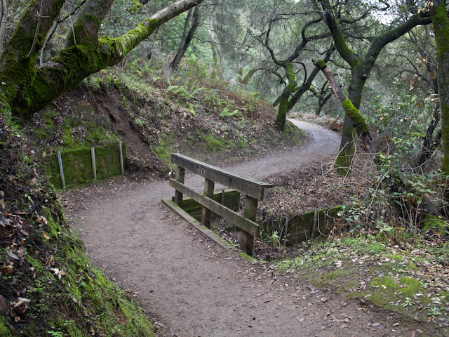 rancho san antonio mossy trail