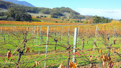Visiting Arrowood Winery which offers outstanding Cabernet Sauvignons