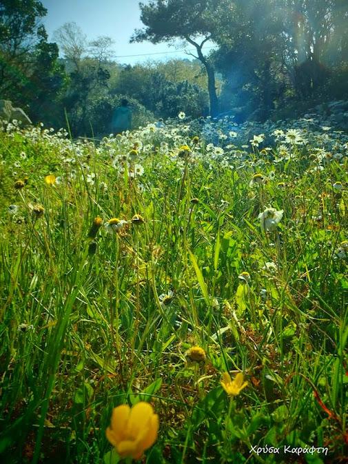 botanical walk with lefteris as a teacher