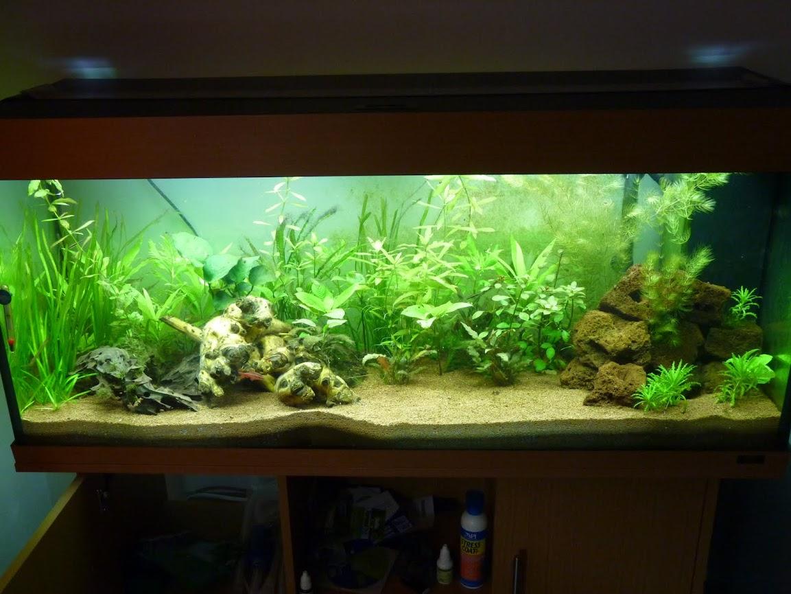 Ma petit histoire Aquariophile de 2009 à aujourd'hui  P1020601