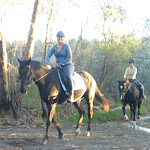 Horse riding on Cullamine Rd near Terrey Hills (307904)