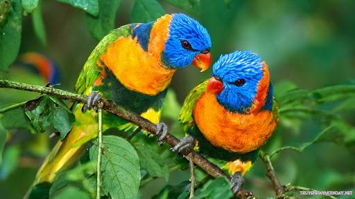 Những Loài Chim Nhỏ Dễ Thương Và Đáng Yêu