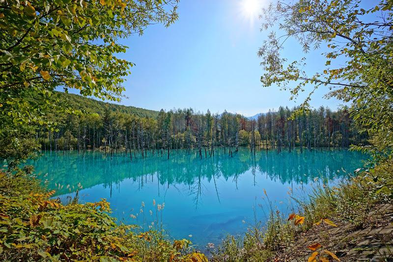 美瑛 青い池 写真1