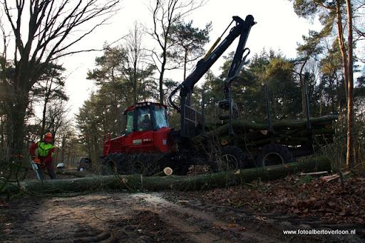 Houtoogst in de bossen van overloon 17-01-2012 (16).JPG