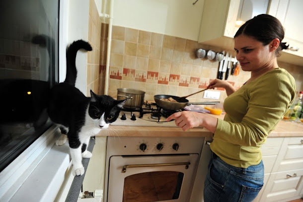 Razvan Anton pisica in bucatarie