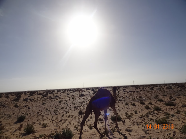 Marrocos e Mauritãnia a Queimar Pneu e Gasolina - Página 5 DSC05793