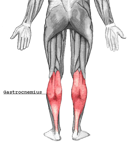 %252522Gastrocnemius.png%252522.png
