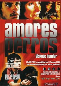 Kẻ Vô Đạo - Amores Perros poster