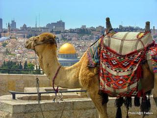 Смотровая площадка Елеонской горы. Экскурсия Иерусалим для семей с детьми. Гид в Израиле Светлана Фиалкова.