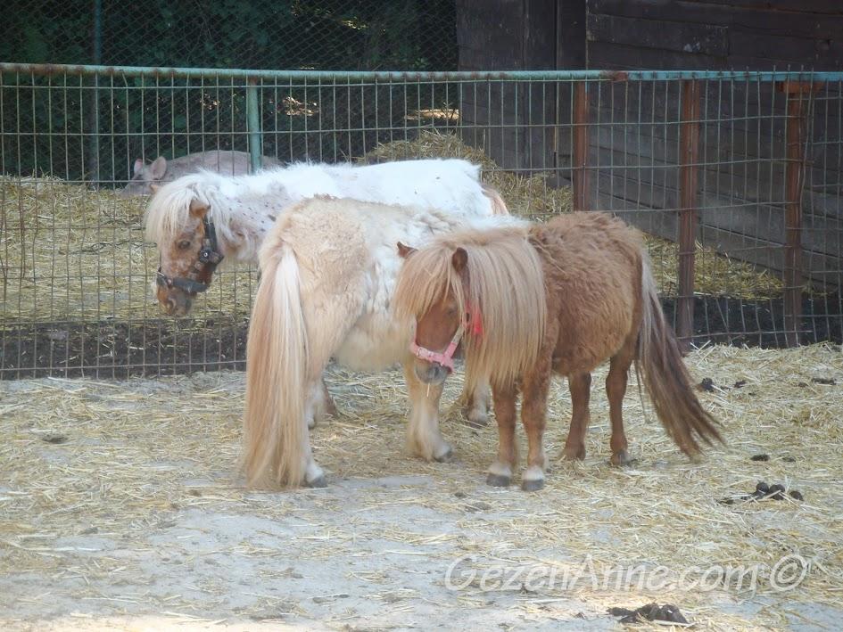 Polonezköy Piknik Park'taki poni atları