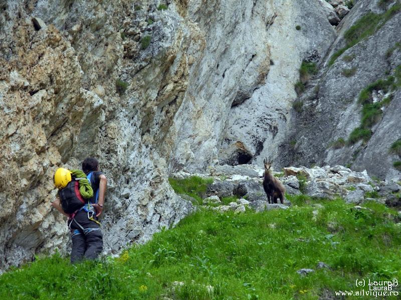 2014.06.28 - P Craiului - Traseul Lespezile Lirei Cu Laura