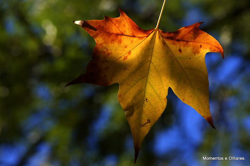 Outono no Jardim