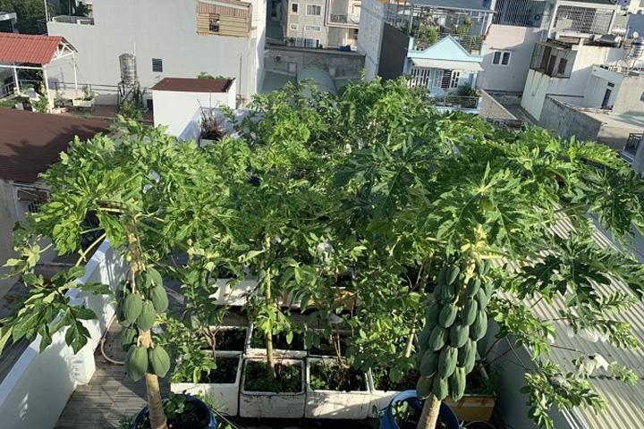 Sân thượng trồng cây ăn quả
