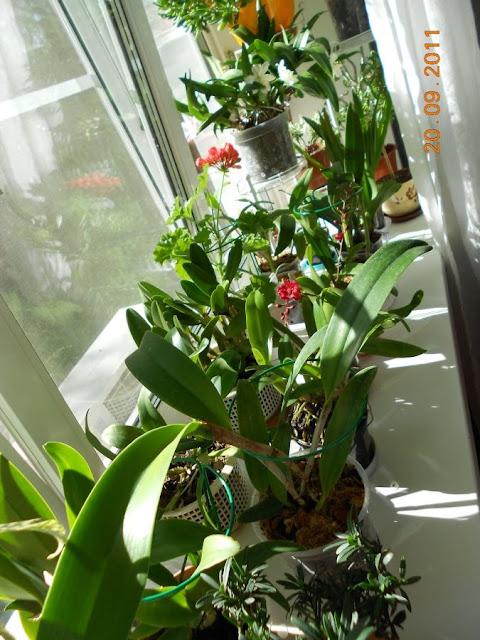 Размещение орхидей - Страница 5 DSCN0884