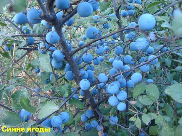 осенние цвета - синий