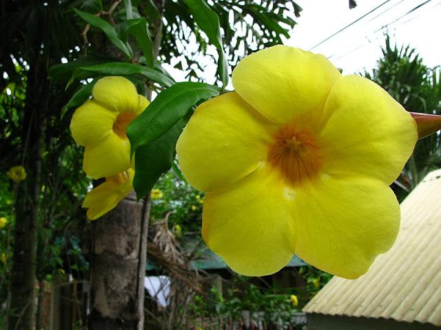 Из зимы в лето. Филиппины 2011 IMG_0003