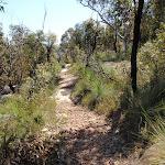 track below Mount Wondabyne (198262)