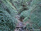 Palo Seco Creek next to Palos Colorados Trail