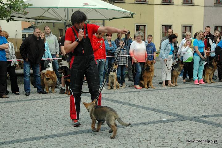 szkolenie psów i mały owczarek niemiecki