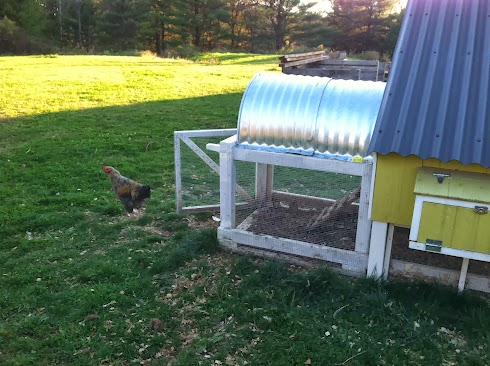 Chicken run with culvert top and hardware cloth sides