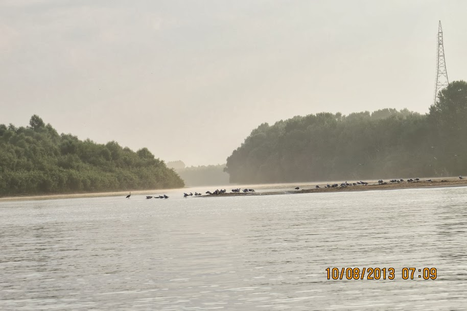 10.08.2013 – Un episod inedit : Inconjurul Incintei Dranov : Intinsura uriasa de la intrarea pe Marea Bucla a Uzlinei