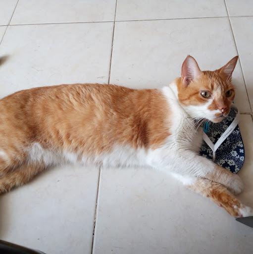 Dalgi Milena Mosquera Arguello picture