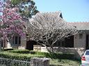 Magnolia at 7 Boomerang Street