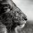 mejsut demiri avatar image