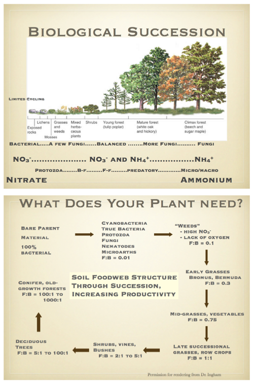 elaine ingham compost tea pdf