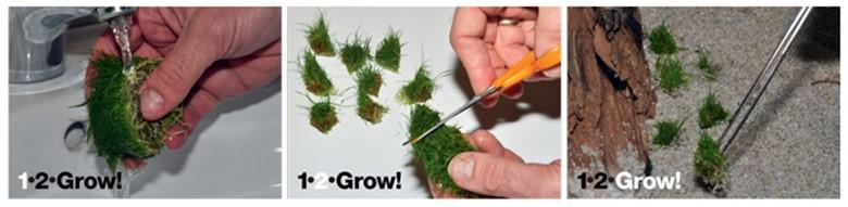 Tropica 1-2-Grow! (1)