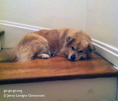 Everyday Photo: Guard Dog