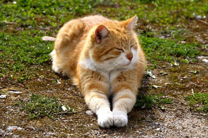 Кот на могиле к чему это