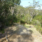 walking along the management trail south of Berowra Heights (331943)
