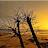 ROY YOHANNAN avatar image