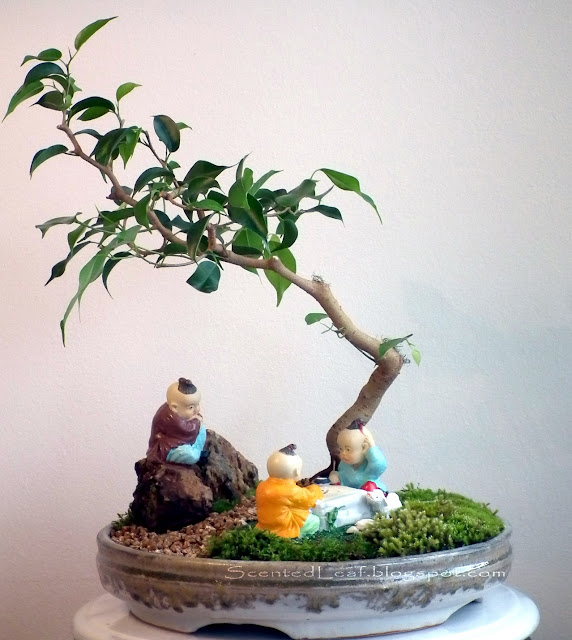 Go-playing (miniature landscape) in the Shade of Ficus Wiandi