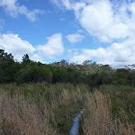 Heath on Nerang Track (305840)
